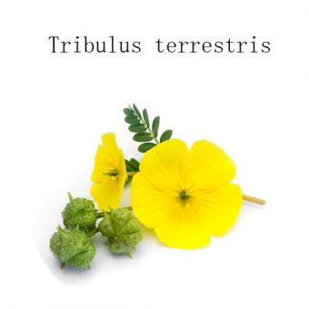Buy Tribulus terrestris extract Powder Manufacturers & Factory